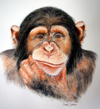 """Gillette the best a Chimp can get"" - Watercolour 10"" x 12"""